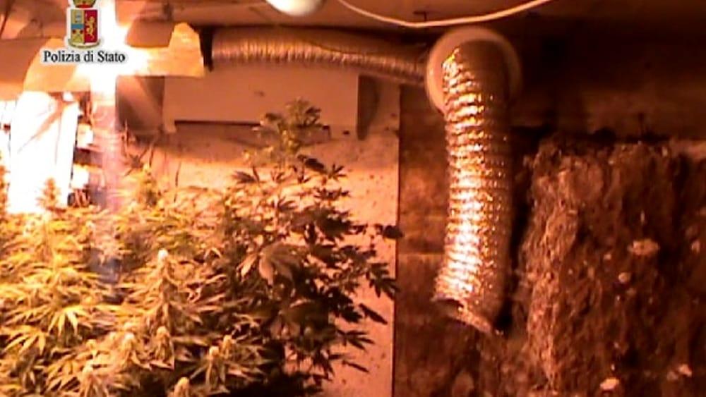 Uditore, trasforma seminterrato in serra e coltiva ...