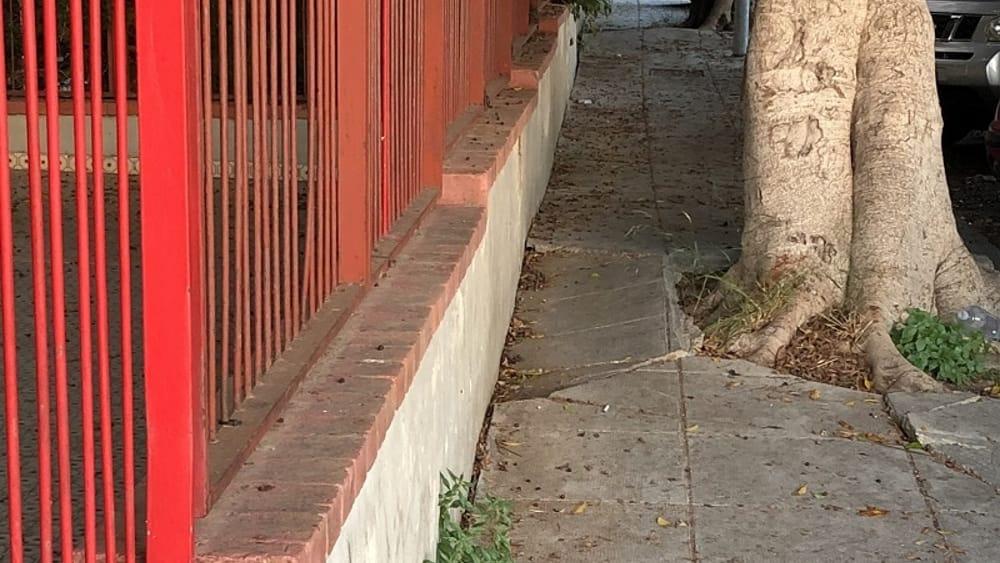 Pallavicino, anziano per colpa delle radici degli alberi in via De Stefano