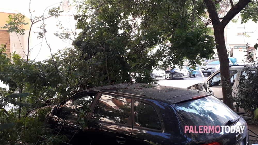 Via Streva, ramo di un albero cade su un'auto: